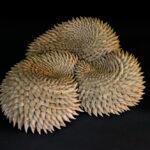 Triple swirl (Angelica Tulimiero)